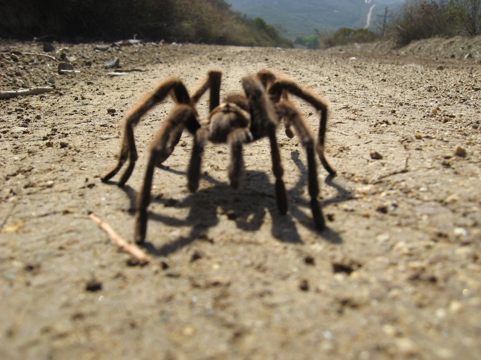 Low angle view of Tarantula, horizon in background