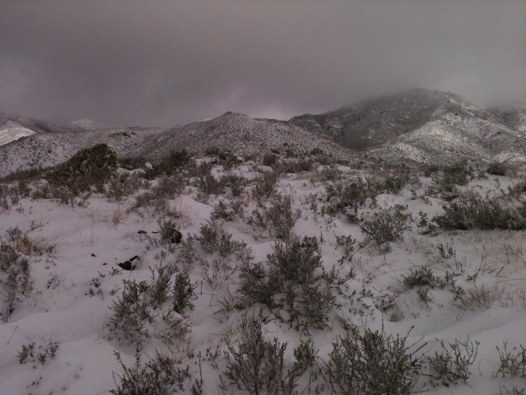 Shrubs on snowy hillside, rocky peaks in background