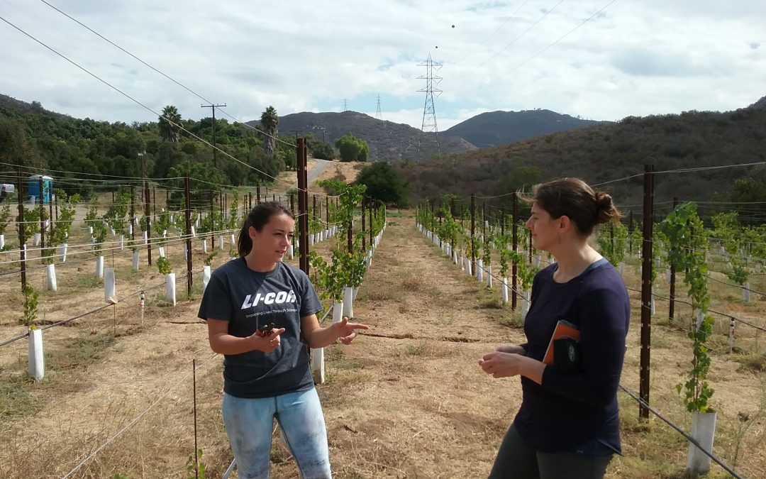 two woman converse in a vineyard