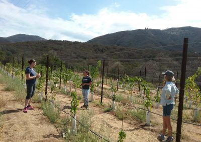 Three women amid grape vines and trellises, scrubby hills in background