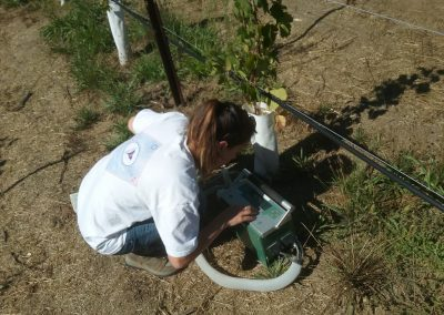 Female scientist operating a device in front of a grape plant