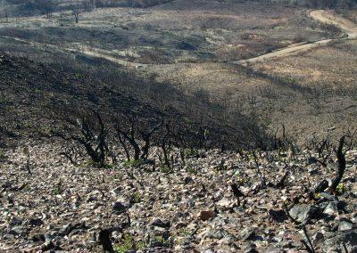 burned, rocky hillside