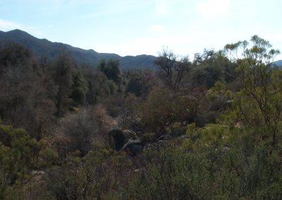 Dense vegetation, mountains in background