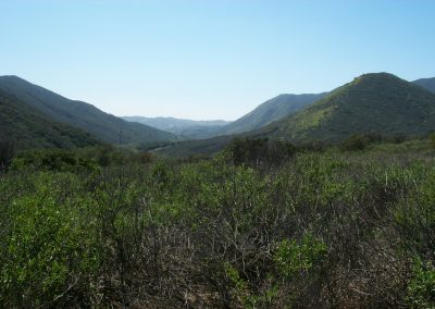 landscape with shrubs in foreground, hills and blue sky in background