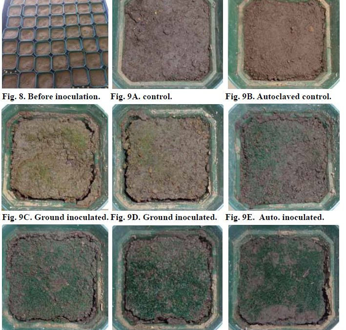 Nine panels showing an array of plastic pots with varying amounts of green growth on the soil surface