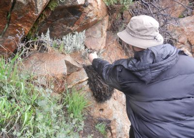 A botanist samples a fern growing from a cliff