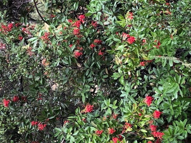 Green shrub with red berries