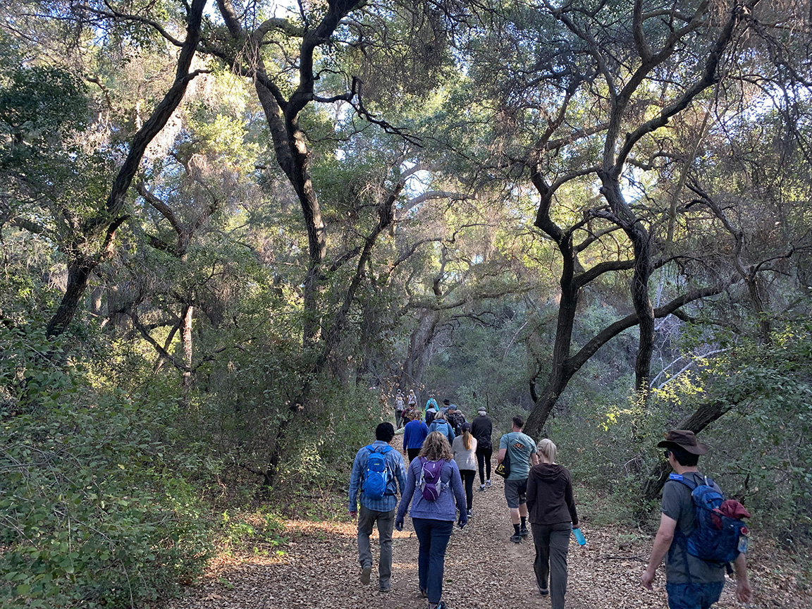 group of 8 hikers walking down a trail with oak woodlands overhead